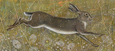 Leaping Hare by Anne Mortimer