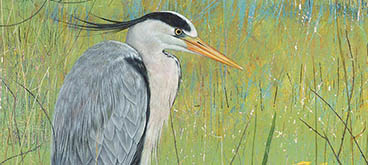 Heron by Anne Mortimer