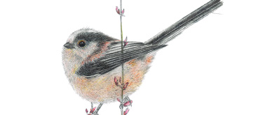 Long Tailed Tit by Anne Mortimer