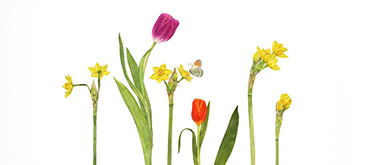 Spring Botanic by Anne Mortimer