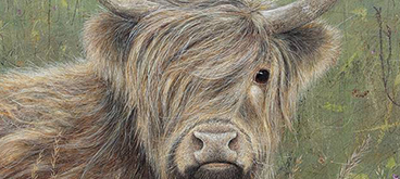 Highland Cow by Anne Mortimer